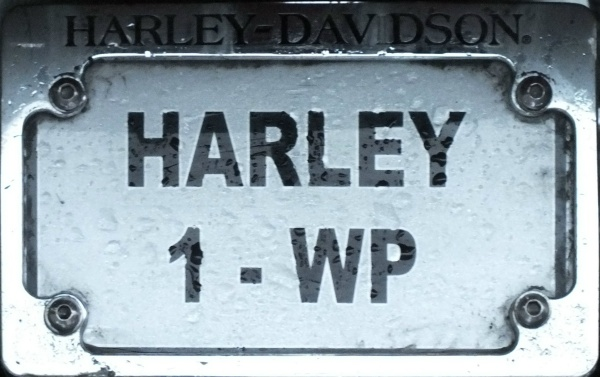 South Africa Western Cape personalized series close-up HARLEY 1-WP.jpg (92 kB)